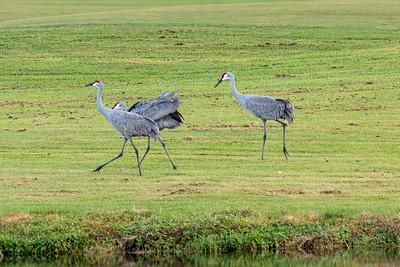 191104_09_FL_7291_Birds-1