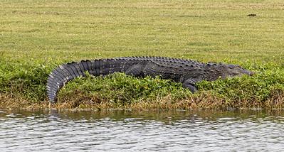 201205_12_FL_7291_Wildlife-1
