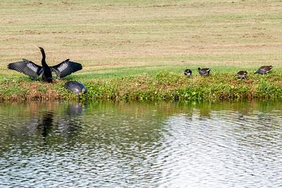 191102_10_FL_7291_Birds-1