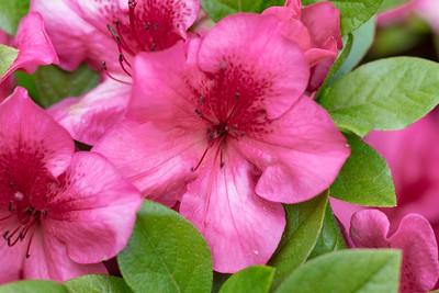 180512_11_6321_Flowers-1