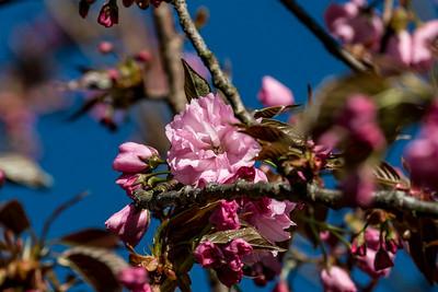 170406_01_6321_Blossoms-1