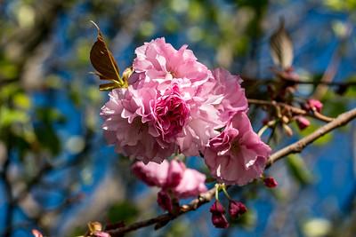170406_09_6321_Blossoms-1