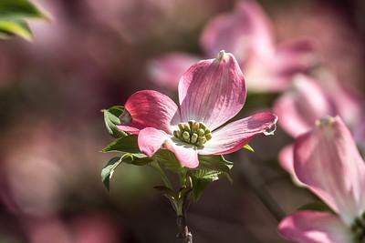 170413_18_6321_Blossoms-2