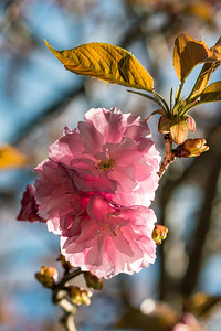 170406_11_6321_Blossoms-1