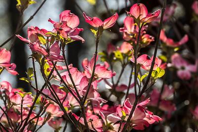 170413_25_6321_Blossoms-2