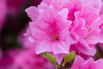 180512_43_6321_Flowers-1
