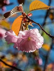170408_55_6321_Blossoms-1