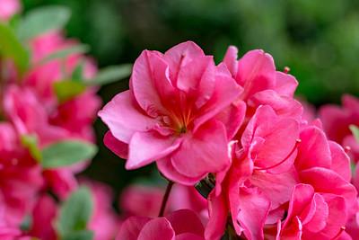 180512_50_6321_Flowers-1