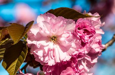 170408_01_6321_Blossoms-1