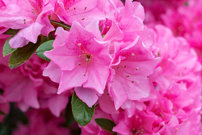 180512_25_6321_Flowers-1