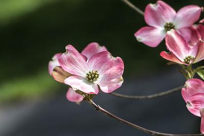 170413_05_6321_Blossoms-2
