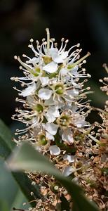 180512_68_6321_Flowers-1