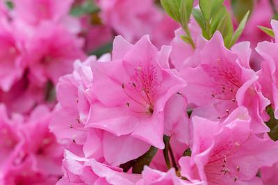 180512_38_6321_Flowers-1