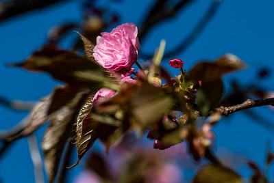 170406_03_6321_Blossoms-1