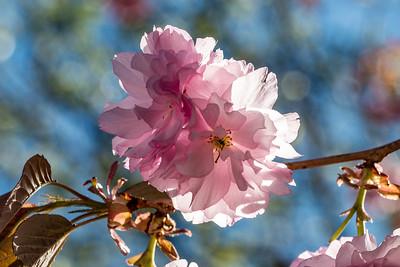 170408_57_6321_Blossoms-1