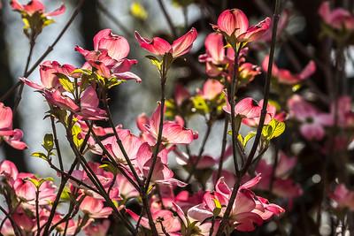 170413_23_6321_Blossoms-2
