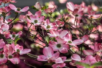 170413_07_6321_Blossoms-2