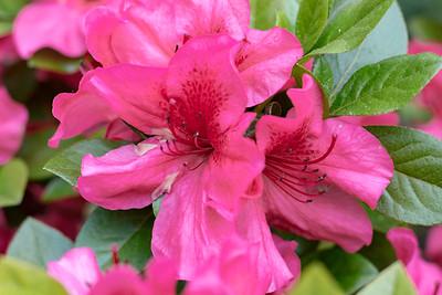 180512_17_6321_Flowers-1