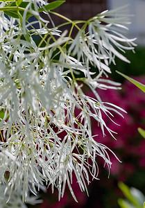 180512_06_6321_Flowers-1