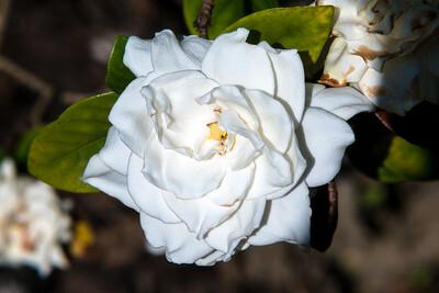 160509_105_FL_SK Flowers-1