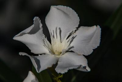 160509_92_FL_SK Flowers-1