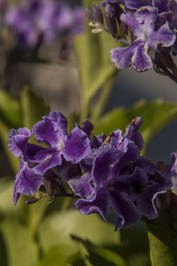 160509_89_FL_SK Flowers-1