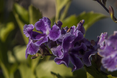 160509_86_FL_SK Flowers-1