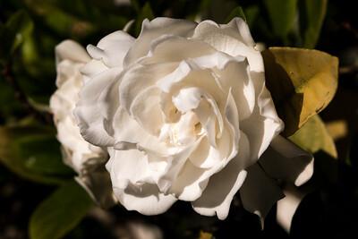 160509_101_FL_SK Flowers-1