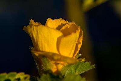 160509_76_FL_SK Flowers-1