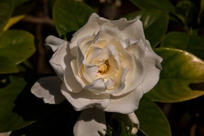 160509_110_FL_SK Flowers-1