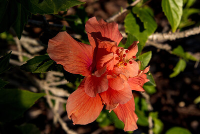 160509_24_FL_SK Flowers-1p1