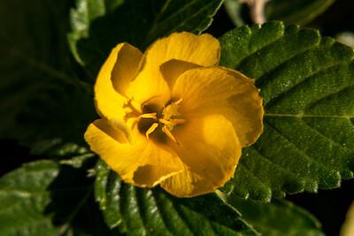 160509_21_FL_SK Flowers-1p1