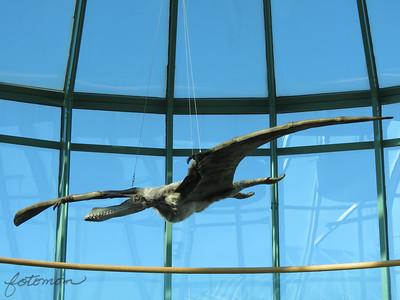 NC  Natural Sciences Museum 011812