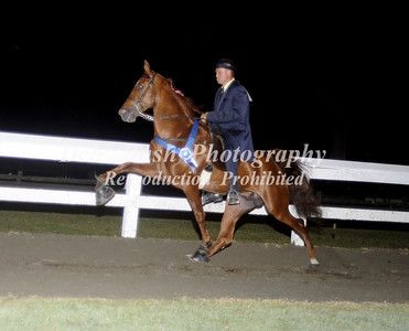 CLASS 37  OPEN STAKE - CANTER
