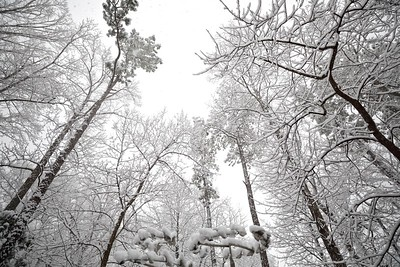 Beautiful wet snow clinging to all the branches