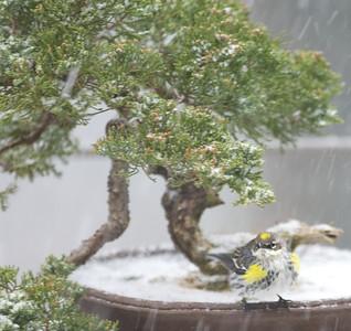 Snow began to fall....