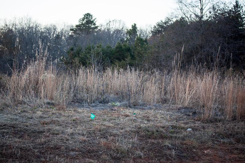 habitat (Shelby, NC Andropogon, etc. site 20131201)
