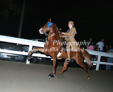 CLASS 24 OPEN SHOW PLEASURE WALKING HORSE SPECIALTY