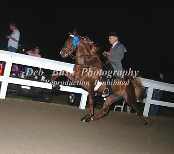 CLASS 26  - 4 YR OLD OPEN SPECIALTY