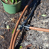 Drip Tubing - In Use
