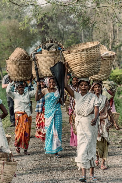 Tea pickers with baskets