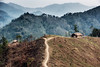 S;ash and burn in Nagaland