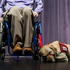 Therapy dog named Apple lays on stage alongside guest speaker Larry Brennan who is an alumni of NEADS program in front of  NEADS 2016 fall graduating class at Monty Tech in Fitchburg on Sunday. Sentinel & Enterprise photo/Jeff Porter