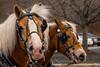 20160130_134324 - 0223 - Winter Days - Horse Drawn Sleigh Rides_LowRes