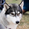 20160130_125009 - 0009 - Winter Days - Sled Dog Meet and Greet_LowRes