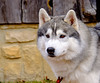20160130_141122 - 0256 - Winter Days - Sled Dog Meet and Greet_LowRes