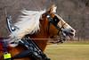 20160130_131240 - 0101 - Winter Days - Horse Drawn Sleigh Rides_LowRes