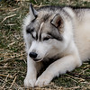 20160130_125319 - 0018 - Winter Days - Sled Dog Meet and Greet_LowRes