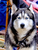 20160130_131009 - 0094 - Winter Days - Sled Dog Meet and Greet_LowRes