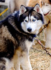 20160130_130618 - 0075 - Winter Days - Sled Dog Meet and Greet_LowRes